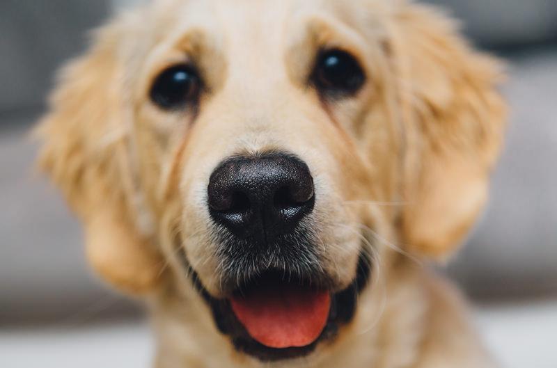 Adotta un cane